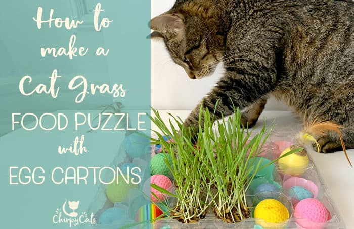 cat playing with food puzzle made with egg carton