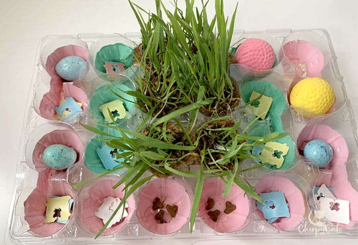 cat food puzzle made from plastic egg cartons
