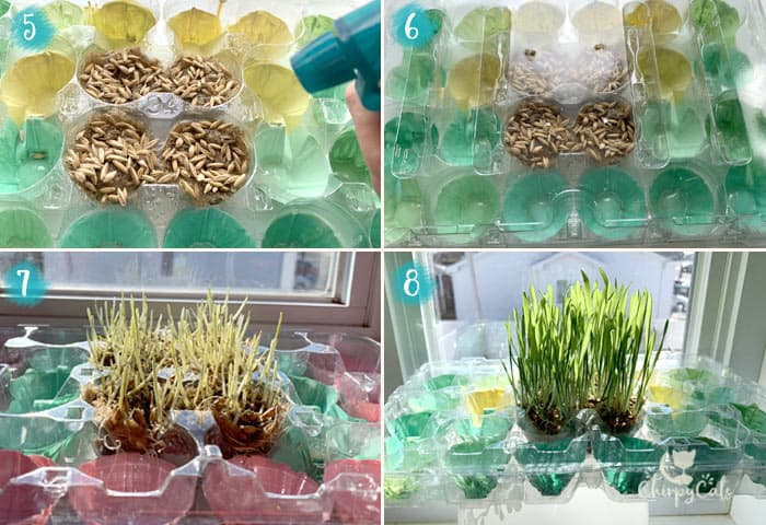 step 5 for how to make a grass food puzzle for your cat